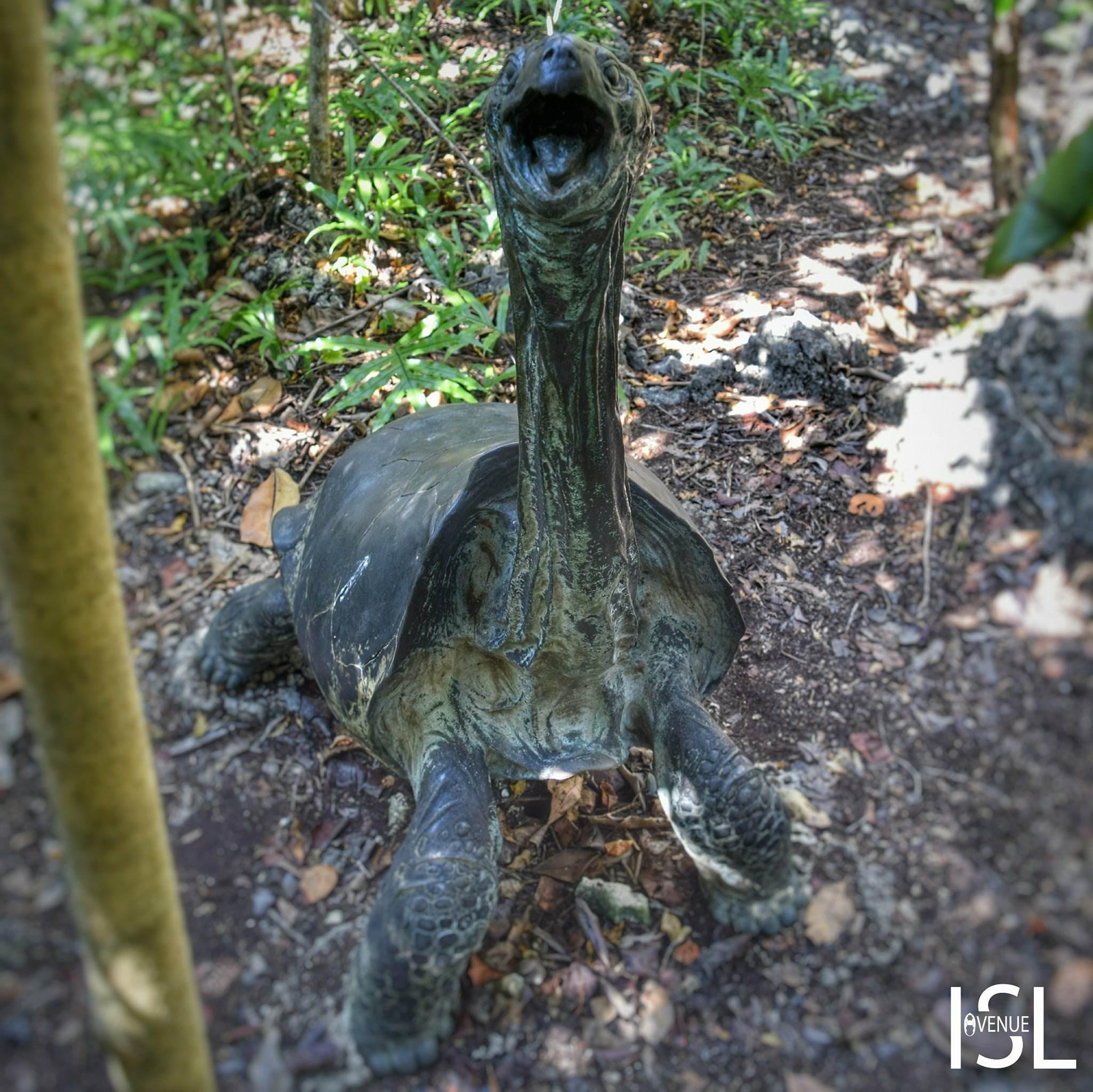 Saddle-backed giant tortoise mauritius
